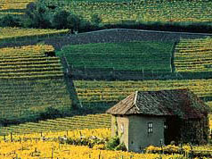 Distesa di vigneti in Alto Adige